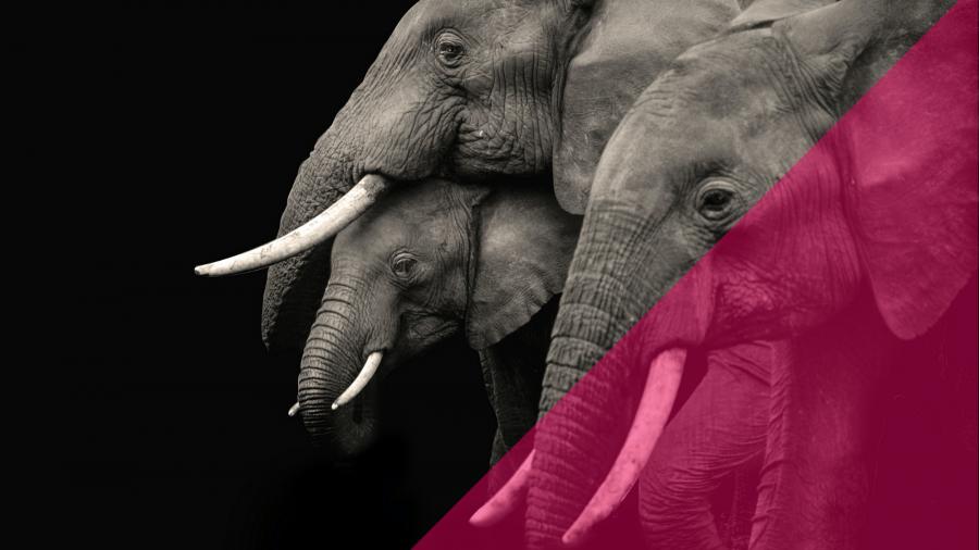 Elephants Can't Jump